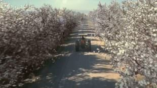 China TVC for California Almonds Production Company Thailand Los Angeles London